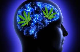 مصرف مکرر ماریجوآنا با کاهش ضریب هوشی (IQ) همراه است.